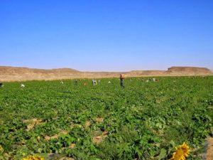wadi rum farm 42