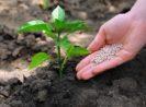 7 Jenis Pupuk Kimia Yang Sering Digunakan Oleh Petani