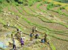 Revitalisasi Pertanian Indonesia, Seberapa Urgensi-kah..?!