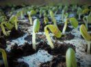 5 Jenis Zat Pengatur Tumbuh (ZPT) Dan Perannya Bagi Pertumbuhan Tanaman