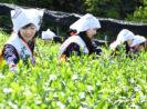 Siapa Bilang Petani Muda Gak Mau Turun Sawah? Ini Buktinya