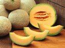 10 Jenis/Tipe Melon yang Paling Banyak Ditanam Di Dunia