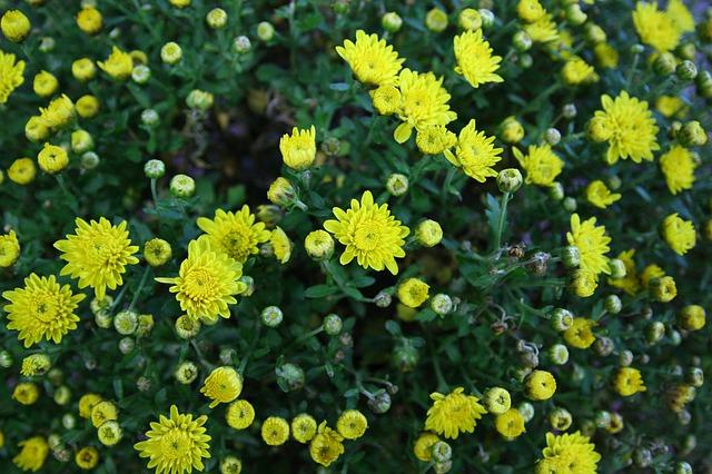 4 Jenis Tanaman Hortikultura Belajartani Com