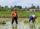 Apa Alasan Anda Jadi Petani ? Sebuah Refleksi di Hari Tani Nasional