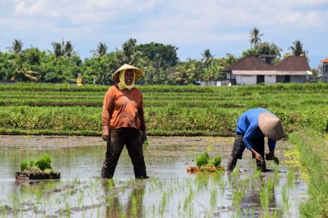 Apa Alasan Anda Jadi Petani Sebuah Refleksi Di Hari Tani Nasional