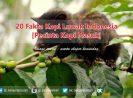 20 Fakta Kopi Luwak Indonesia [Pecinta Kopi Masuk]