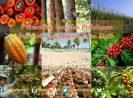 9 Komoditas Unggulan Perkebunan Indonesia yang Dikenal Pasar Dunia