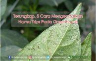 Terungkap, 5 Cara Mengendalikan Hama Trips Pada Greenhouse