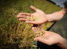 3 Hal Penyebab Petani Tak Tenang