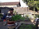 Belajar Bertani di Perkotaan (Urban Farming) Sekaligus Pengabdian Masyarakat