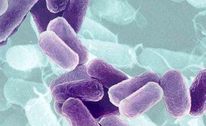Peran Azotobacter & Azospirillium